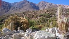 View from our campsite in the Elqui Valley
