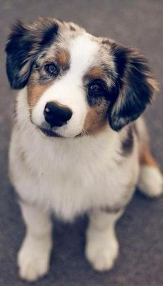 Please Love Me!  At Orchard Lake Pet Resort we strive to provide the best overnight care and grooming services for our canine clients!  Call (248) 372-7000 or visit our website www.orchardlakepetresort.com for more information about the services we provide!