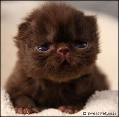 """""""A true cat lover cradles a newborn kitten and knows that 9 lives will never be nearly enough."""" --Author Unknown"""