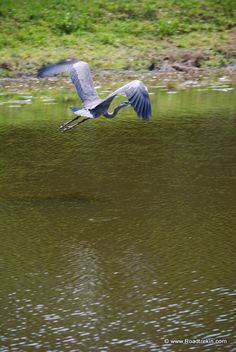 The Birds of St. Augustine, Florida http://durhamwakecountynews.com/the-birds-of-st-augustine-florida/