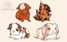 teddy breaded guinea pig - Google Search