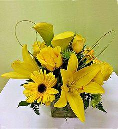 Yellow Sonata (Flower Symphony in Frankfort, IL)
