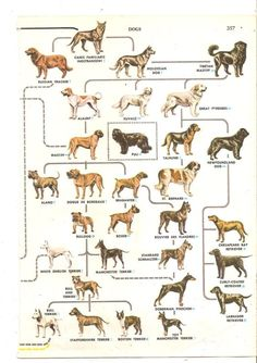 Dogs, is a mammals which evolve from a wolf. From DNA test it happened 15.000 years ago. Now, the dog have so many variants from ...