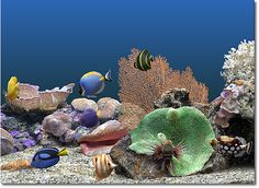 Fish Tank Moving Desktop Backgrounds | ... new large tank allows the user to place up to 30 fish in their tank