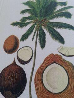 Dag 87/365 Nuttige kokospalm