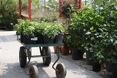 """Southeast Texas Gardening """"To Do"""" list by month, so helpful!"""