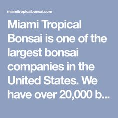 Miami Tropical Bonsai is one of the largest bonsai companies in the United States. We have over bonsai trees in stock, handmade bonsai pots, bonsai tools Ant Colony, Bonsai Tools, Pots, Miami, Tropical, United States, Trees, The Unit, Handmade