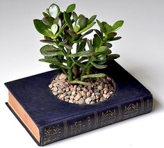 a great way to upcycle an old book... wouldn't this look just quaint in a library?