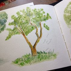 Outra rvore Goiabeira Another tree Guava  tree dwgdaily watercolor