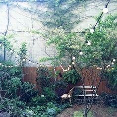 Satoshi Kawamoto Herb Garden, Indoor Garden, Garden Plants, Granny Flat, Rooftop, Cosy, Sweet Home, Bloom, Herbs