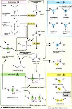 Биомолекулы Organic Chemistry, Pharmacy, Biology, Physics, Medicine, Science, Train, Learning, School