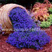 lobelia tohum çeşitlerini bulabileceğiniz online tohum satışı websitesi zengardentr.com