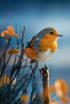 Nice to meet you. - Nice to meet you. Nice to meet you. Pretty Birds, Beautiful Birds, Animals Beautiful, All Birds, Little Birds, Exotic Birds, Colorful Birds, Exotic Pets, Vogel Gif