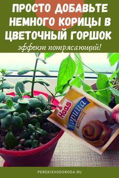 Organic Gardening, Gardening Tips, Plant Cuttings, Indoor Flowers, Square Foot Gardening, Garden Trellis, Geraniums, Diy For Teens, Botany