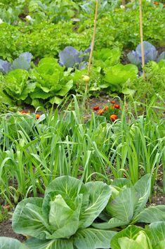 astuce pour prot ger les tomates de la pluie jardinage pinterest. Black Bedroom Furniture Sets. Home Design Ideas