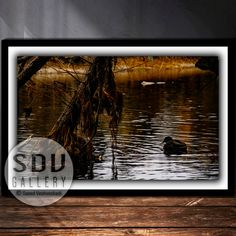 Downloadable Image, Digital Photo, Printable Wall Art, Dream, Tree, River, Plant, Water, Autumn, Duck, Reflection, Vienna, Austria Vienna Austria, Photo Tree, Landscape Photos, Nature Photos, Printable Wall Art, Reflection, Digital Art, Printables, Autumn