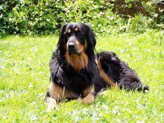 Ховаварт (фото): Невероятно обаятельный и умный пес Смотри больше http://kot-pes.com/xovavart-foto/