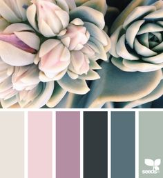Succulent Hues - http://www.design-seeds.com/succulents/succulent-hues-9