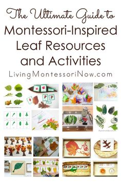 A huge roundup of Montessori-inspired leaf printables, activities, and products for a leaf unit in the fall or at any time at home or in the classroom - Living Montessori Now
