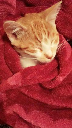 My cat# Noah ♡