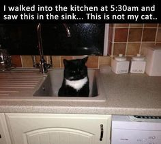 True story. Hubby woke up to find a cat on our counter. Came right in through the doggy (cat) door.