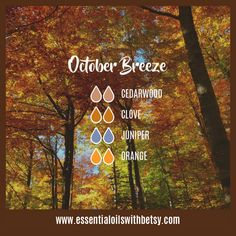 October Breeze Fall Diffuser Blend: Cedarwood, Clove, Juniper, Orange Here are no less than FIFTY-SIX fall essential oil diffuser blends for your enjoyment. Something sure smells good! With BONUS 16 page e-Book! Fall Essential Oils, Essential Oil Diffuser Blends, Essential Oil Uses, Tangerine Essential Oil, Juniper Essential Oil, Clove Essential Oil, Doterra Diffuser, Aroma Diffuser, Elixir Floral