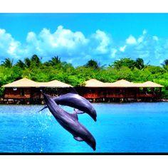 Roatan Anthony's Key! I will never forget the dolphin feeding and kisses.