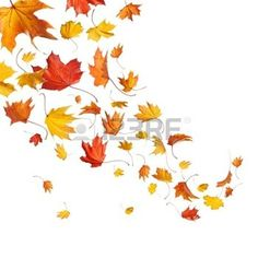 hojas de otoño: Caída de las hojas de otoño aislados en fondo blanco