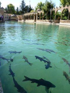 Abraham's Pool in Şanlıurfa