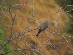 Minha janela - meus pássaros #saopaulo #amenimario #marioameni #passaros #bird