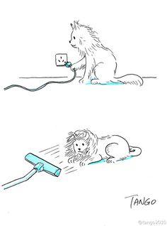 长毛猫的狮子梦..