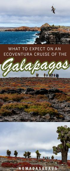 Here's what to expect on a 1 week cruise of the Galapagos islands with Ecoventura. #galapgos #southamerica