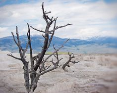Who knew something dead could be so interesting. Mammoth, Yellowstone.