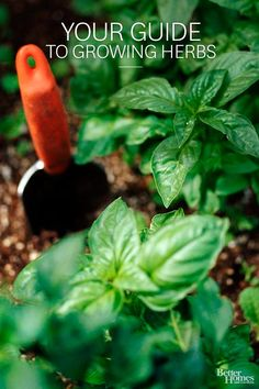 Add Flavor To Any Dish With Herbs Straight From Your Garden.