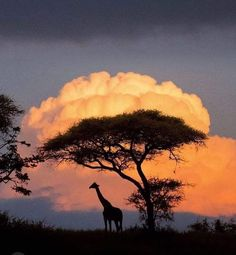 Places To Travel, Places To Visit, Travel Destinations, Nature Photography, Travel Photography, Amazing Photography, Kenya Travel, Usa Travel, Out Of Africa