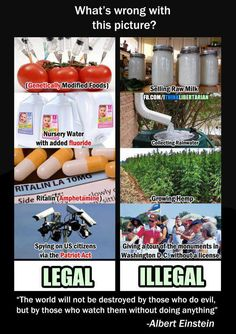 """""""A Free Citizen Should Have The Right to Grow Food on Their Own Property: http://www.realfarmacy.com/a-free-citizen-should-have-the-right-to-grow-food-on-their-own-property/ US Government Lobbying for Monsanto across the Globe: http://www.whydontyoutrythis.com/2013/05/us-government-lobbying-for-Monsanto-across-the-globe.html"""""""