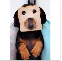 """Apparently I'm """"in-bread"""""""