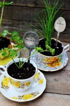 love how dainty teacups and mismatched spoons have been repurposed here as herb containers.