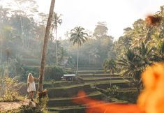 Tegallalang rice terraces in Ubud, Bali Rice Terraces, Ubud, Bali, Photo And Video, Painting, Instagram, Paintings, Draw, Drawings