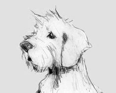 Cairn Terrier Print 11x14 inch or A3, Cairn Terrier Portrait, Modern Cairn Terrier Sketch, Cairn Terrier Gifts, Cairn Terrier Dog Pet Gifts