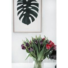 The Monstera Plant print, Flowers & and a cat  - We love it.