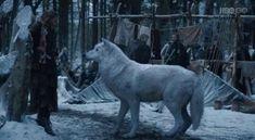 Fantasma, el huargo de Jon Nieve en el capítulo 2x02 de Juego de Tronos.