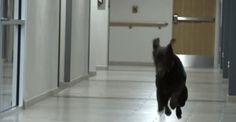 The therapy dogs at Walter Reed are magical. ✨ http://u.pw/1MH2f15  Embedded image permalink