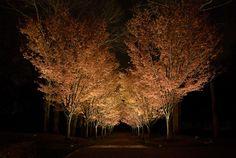 Janet Lennox Moyer | landscape lighting designer