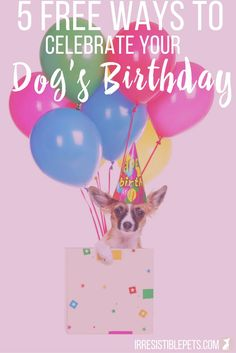 Top 5 Free Ways to Celebrate Your Dog's Birthday - Irresistible Pets Dog Birthday Presents, Dog Birthday Gift, Animal Birthday, Best Birthday Gifts, 10th Birthday, Birthday Cake, Birthday Activities, Dog Activities, Birthday Party Themes