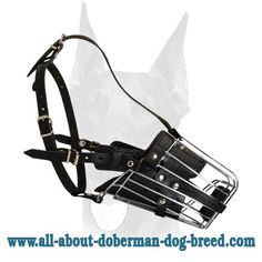 Fully leather padded basket #Doberman #muzzle for #attack/agitation training $39.90 Doberman Dog Breed, Doberman Training, Black Doberman, Doberman Pinscher Puppy, Baby Puppies, Puppies For Sale, Dogs And Puppies, Chocolate Doberman, Puppy Litter