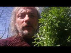 Oczyszczający wiosenny napój z przytulii czepnej, dla mnie wielkie odkrycie tej wiosny! - YouTube Youtube, Herbs, Herb, Youtubers, Youtube Movies, Medicinal Plants