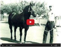 Watch Rare Video Of The Legendary Poco Bueno!!