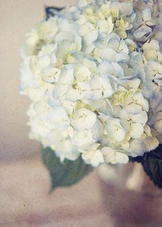Hydrangeas. Beautiful. LOVE LOVE LOVE THESE COLOURS!!!