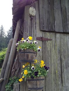 Hanging buckets of pansies on an old pulley at Campbell Valley Park in Langley, B.C.